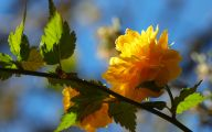 Yellow Flowers In Spring  15 Desktop Background