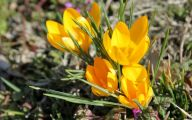Yellow Flowers In Spring  18 Widescreen Wallpaper