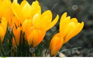 Yellow Flowers In Spring  2 High Resolution Wallpaper