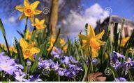 Yellow Flowers In Spring  24 Desktop Background