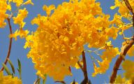 Yellow Flowers In Spring  26 Free Wallpaper
