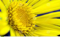 Yellow Flowers In Spring  28 Cool Wallpaper