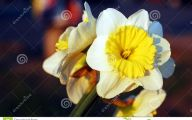 Yellow Flowers In Spring  8 Background Wallpaper