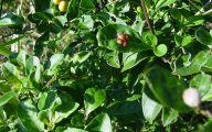 Yellow Flowers Red Berries  16 Widescreen Wallpaper