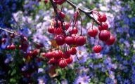 Yellow Flowers Red Berries  31 Cool Hd Wallpaper