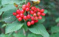 Yellow Flowers Red Berries  32 Cool Wallpaper