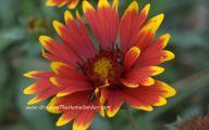 Yellow Flowers Red Berries  7 Desktop Wallpaper