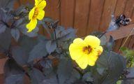 Yellow Flowers Red Leaves  27 Desktop Wallpaper