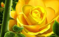 Yellow Flowers Roses  12 Free Wallpaper