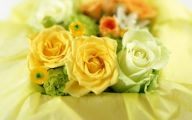 Yellow Flowers Roses  14 Cool Hd Wallpaper