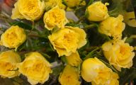 Yellow Flowers Roses  18 Widescreen Wallpaper