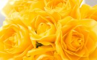 Yellow Flowers Roses  25 Background