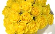 Yellow Flowers Roses  4 Hd Wallpaper