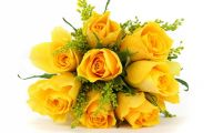 Yellow Flowers Roses  8 High Resolution Wallpaper
