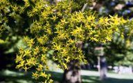 Yellow Flowers Tree  15 Hd Wallpaper