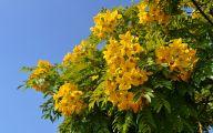 Yellow Flowers Tree  16 Widescreen Wallpaper