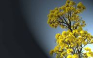 Yellow Flowers Tree  2 Wide Wallpaper