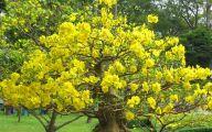 Yellow Flowers Tree  24 Desktop Background