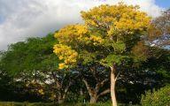 Yellow Flowers Tree  25 Desktop Wallpaper