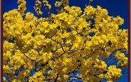 Yellow Flowers Tree  26 Cool Hd Wallpaper