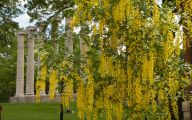Yellow Flowers Tree  6 Free Hd Wallpaper