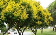 Yellow Flowers Tree  7 High Resolution Wallpaper