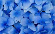 Beautiful Flowers Wallpaper Blue On Blue  15 Desktop Background