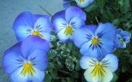 Beautiful Flowers Wallpaper Blue On Blue  18 Background