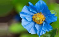 Beautiful Flowers Wallpaper Blue On Blue  19 Background Wallpaper