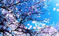 Beautiful Flowers Wallpaper Blue On Blue  3 Widescreen Wallpaper