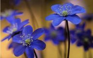 Beautiful Flowers Wallpaper Blue On Blue  5 Desktop Background