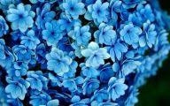 Beautiful Flowers Wallpaper Blue On Blue  6 Desktop Wallpaper