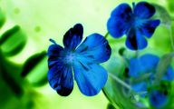 Beautiful Flowers Wallpaper Blue On Blue  9 Wide Wallpaper