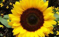 Black Flowers Black Sun  24 Wide Wallpaper