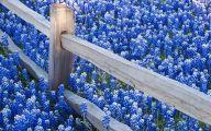 Blue Flowers Desktop Wallpaper  13 Hd Wallpaper