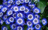 Blue Flowers For Garden  10 Background