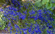 Blue Flowers For Garden  11 Free Hd Wallpaper