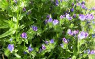 Blue Flowers For Garden  20 Cool Hd Wallpaper