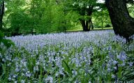 Blue Flowers For Garden  22 High Resolution Wallpaper