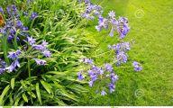 Blue Flowers For Garden  5 Widescreen Wallpaper
