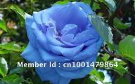 Blue Flowers For Garden  7 Widescreen Wallpaper