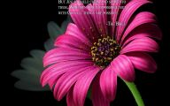 Flower Wallpaper Quotes 2 Free Hd Wallpaper
