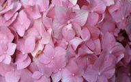 Flower Wallpaper Quotes 21 High Resolution Wallpaper