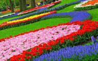 Flowers For Garden  115 High Resolution Wallpaper