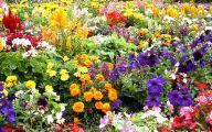 Flowers For Garden  120 Desktop Wallpaper