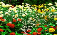 Flowers For Garden  125 Widescreen Wallpaper