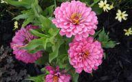 Flowers For Garden  126 Free Wallpaper