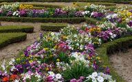 Flowers For Garden  127 Desktop Background