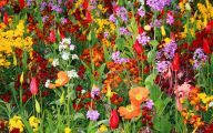 Flowers For Garden  130 Background