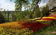 Flowers For Garden  133 Cool Hd Wallpaper